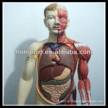 Modelo 170 cm de corpo de corpo humano de luxo com órgãos internos
