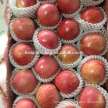 China fresh Qinguan apple of Shannxi origin