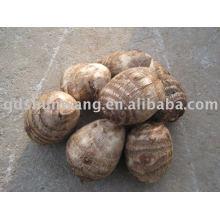top chinese fresh big taro root 120g