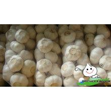 Alho branco fresco / alho fresco / alho Jinxiang