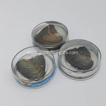 Wholesale Canned Genuine Oyster Shell Pearl In Can