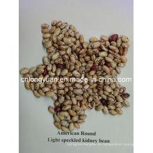 Leichte gesprenkelte Kindney American Round Shape Bean