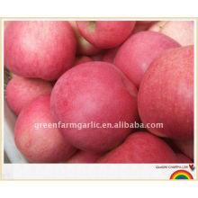 Apfel Frucht frischen Fuji Apfel Exporteur in China