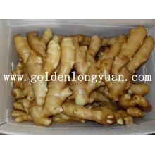 Fresh Ginger Supplied by Golden Supplier