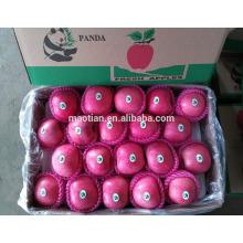 Китай свежие яблоки Фуджи обработаны нашей собственной фабрикой из наших собственных запасов