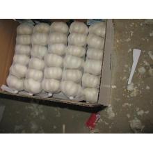 Fresh Pure White Chinese Garlic (5.0cm and up)
