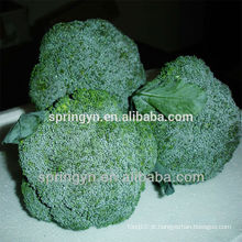 Brócolis verdes da China