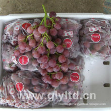 Chinês de boa qualidade Fresh Purple Global Grape