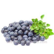 Polvo orgánico certificada 100% natural del extracto del arándano de la alta calidad