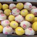 Свежие цитрусовые плоды, свежие лимоны, свежие пуп и Валенсия апельсины из Китая