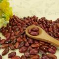 Hight Quality Bulk Dosen kleine rote Bohnen