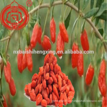 Ningxia wolfberry traditional Chinese medicine function