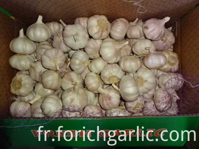 Normal White Garlic Exporter