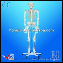Modelo de esqueleto humano plástico avançado da ISO-tamanho180cm de altura