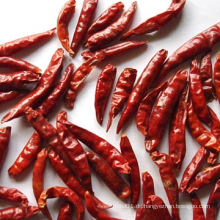 4-7cm Tianying Chili Großer Lieferant