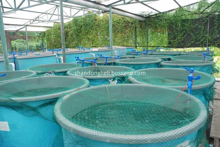 Roots Type Aerator Blower For Fish Farm