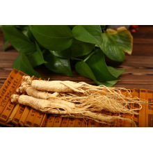 High quality medicinal materials white ginseng