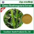 Cissus Quadrangularis Extrakt