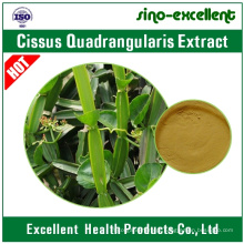 Extrato de Cissus Quadrangularis / extrato de Lei Gong Teng