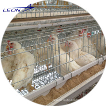 Leon series A-frame broiler and layer cage for chicken house
