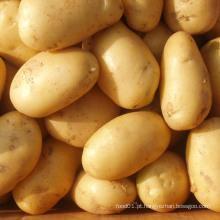 Exportação de boa qualidade Batata chinesa fresca