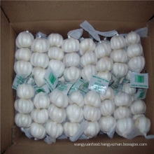 Fresh Case Of White Garlic Is Provided