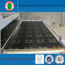 17mm Black Finger Joint Film Faced Plywood with Logo