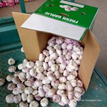 Alho fresco embalado na caixa de 10kg para o mercado de Rússia