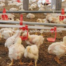 Equipamento completo das aves domésticas do grupo completo da venda para a casa das aves domésticas