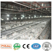 Automatic a Style Chicken Farm Equipment Layer Broiler Pullet Cage