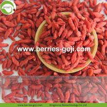 Panen baru Hot Sale Kering Himalaya Goji Berries