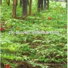 100% Nature Gymnema Sylvestre Extrait
