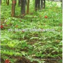 100% Nature Gymnema Sylvestre Extract