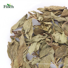 Finch New Arrival Herb Tea Dry Mint Whole Leaf