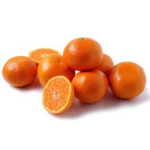 Fresh Naval orange, Citrus orange