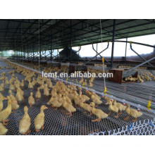 China factory design poultry farm equipment for chicken farm