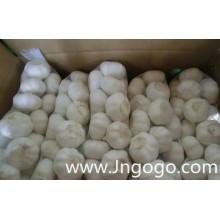 Exportação Nova Colheita Fresca Boa Qualidade Alho Branco Normal