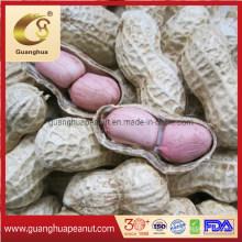Best Peanut Kernels From Shandong 20/24