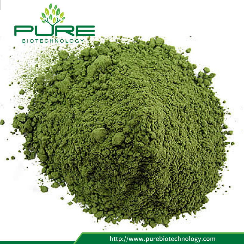 Wheat grass extract powder