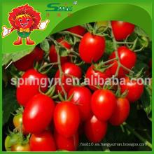 Exportación de productos agrícolas Especificación tomate cherry rojo fresco