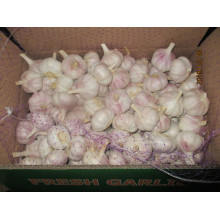 Normal White Garlic New 2019