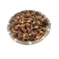 Agaricus blazei Extrakt 50% Agaricus blazei Pilzextrakt
