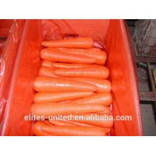 Fresh Carrots in good taste