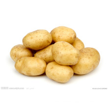 Competitive Quality Fresh Potato (150g and up)