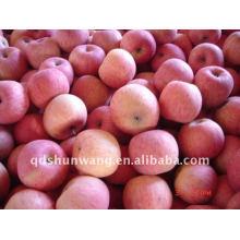 Pomme de fuji fraîche