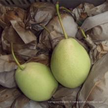 Sélection de qualité fraîche poire Shandong vert