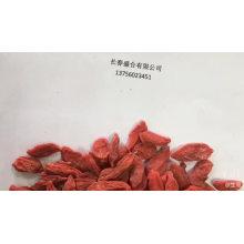 Factory price Berry Organic Goji Berry Powder Goji Berry Plants