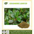Bilberry Leaf Extract Flavones 10% by UV, 5: 1 10: 1