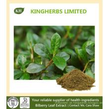 Heidelbeerblatt Extrakt Flavone 10% durch UV, 5: 1 10: 1