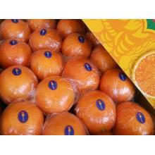 Fresh First Quality Navel Orange